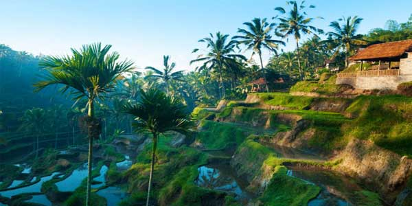 Bali holiday packages from Ahmedabad