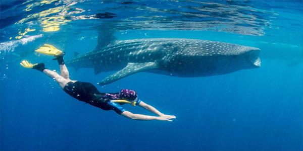 swim-with-sharks