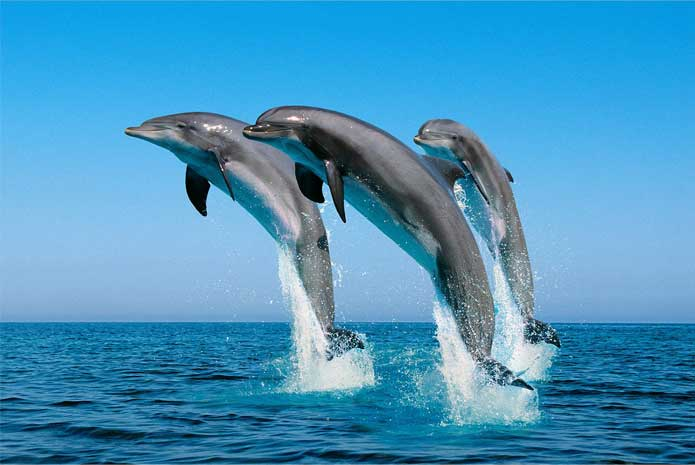 Top 7 Destinations In Philippines for Dolphin and Whale Watching