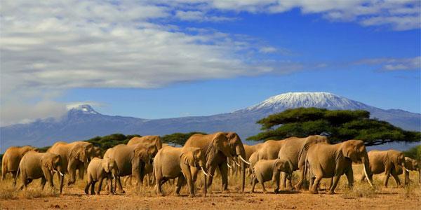 Amboseli-NP