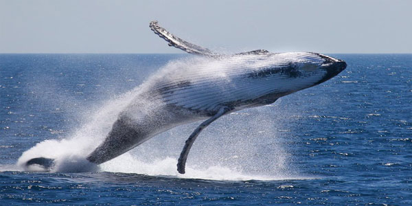 Whale-Watching-2222