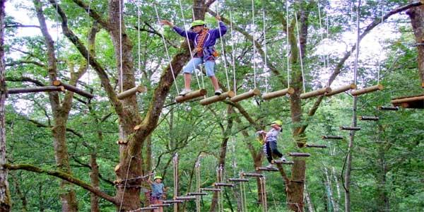 bali-treetop