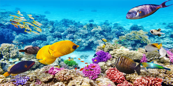 Australia tour packages from Ahmedabad